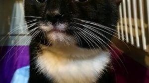 Poznań: Pisklęta, koty i sarny, czyli wiosenne interwencje strażników miejskich