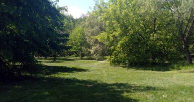 Mosina stawia na łąki kwietne i ogrody deszczowe