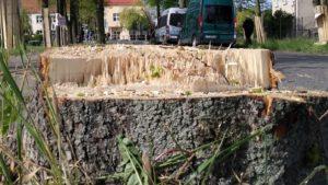 lipy 6 fot. k. adamska 300x169 - Suchy Las: Aktywiści przypięli się do lip. Żądają przyjazdu starosty