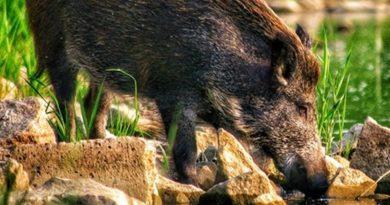 Locha 2 fot. fot. foto_zawadzki