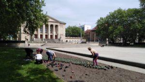 nowe kwiaty fot. zzm 300x169 - Poznań: Nowe kwiaty w centrum miasta