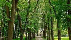 park browarna 3 fot. ump 300x169 - Poznań: Mamy nowy park. Przy Browarnej