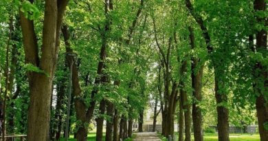 park Browarna 3 fot. UMP