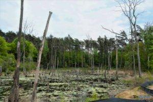 park krajobrazowy promno fot. karolina adamska 0182 300x200 - Park Krajobrazowy Promno: wycieczka w inny świat
