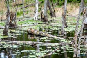 park krajobrazowy promno fot. karolina adamska 0187 300x200 - Park Krajobrazowy Promno: wycieczka w inny świat