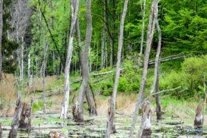 park krajobrazowy promno fot. karolina adamska 0188 300x200 - Park Krajobrazowy Promno: wycieczka w inny świat
