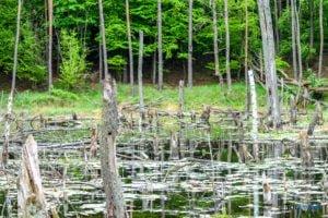 park krajobrazowy promno fot. karolina adamska 0190 300x200 - Park Krajobrazowy Promno: wycieczka w inny świat