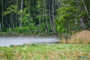 park krajobrazowy promno fot. karolina adamska 0193 300x200 - Park Krajobrazowy Promno: wycieczka w inny świat