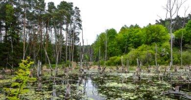Park Krajobrazowy Promno fot. Karolina Adamska