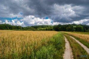 park krajobrazowy promno fot. slawek wachala 08404 300x201 - Park Krajobrazowy Promno: wycieczka w inny świat