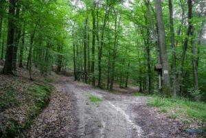 park krajobrazowy promno fot. slawek wachala 08425 300x201 - Park Krajobrazowy Promno: wycieczka w inny świat