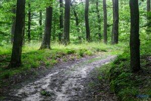 park krajobrazowy promno fot. slawek wachala 08431 300x201 - Park Krajobrazowy Promno: wycieczka w inny świat