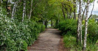 Kurlandzka wiadukt os. Orła Białego Żegrze ekrany drzewa fot. Sławek Wąchała