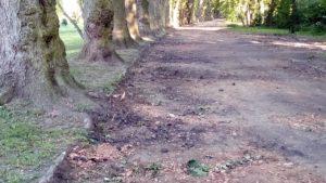 aleja park wodziczki 3 300x169 - Poznań: Remont alei w parku Wodziczki. Z usuwaniem... korzeni rosnących drzew