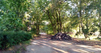 aleja park Wodziczki