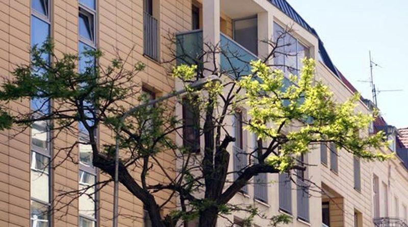 drzewo na Sczanieckiej 2 fot. ROSŁ