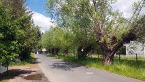 kasztanowa chyby 3 fot. a. kolodziej 300x169 - Tarnowo Podgórne: 60 starych drzew przeznaczonych do wycinki