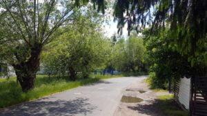 kasztanowa chyby 4 fot. a. kolodziej 300x169 - Tarnowo Podgórne: 60 starych drzew przeznaczonych do wycinki