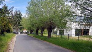 kasztanowa chyby 5 fot. a. kolodziej 300x169 - Tarnowo Podgórne: 60 starych drzew przeznaczonych do wycinki
