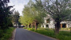 kasztanowa chyby 6 fot. a. kolodziej 300x169 - Tarnowo Podgórne: 60 starych drzew przeznaczonych do wycinki