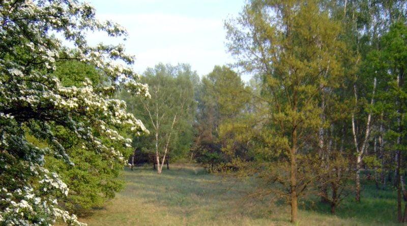 las Dębina