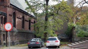 ogrodowa fot. rosm 300x169 - Poznań: Miasto tajemniczych zniknięć drzew