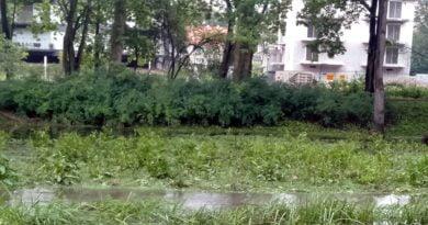 Poznań: Petycja dla ochrony zielonego Sołacza