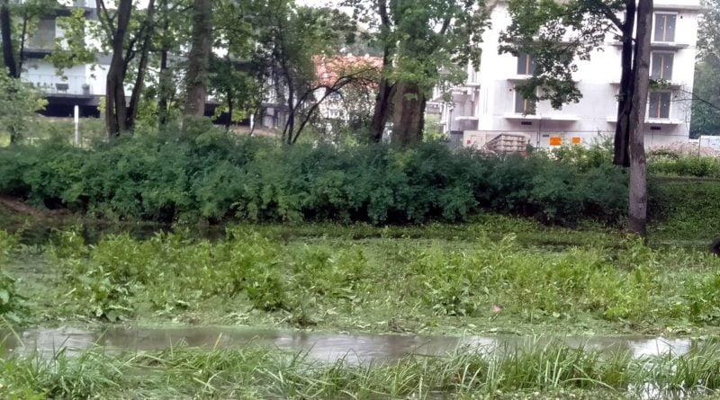 bodganka wylala 3 800x445 - Poznań: Petycja dla ochrony zielonego Sołacza