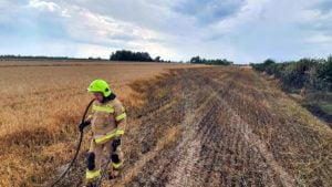 pozar fot. osp golina 300x169 - Golina: Pożar pola ze zboża w Bobrowie