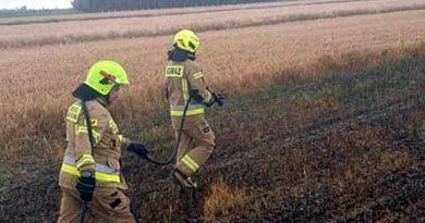 pożar pola, archiwum fot. OSP Golina