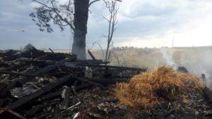 pozar fot. osp granowo1 300x169 - Buk: Spłonęło zboże na polu. Jedna osoba poszkodowana
