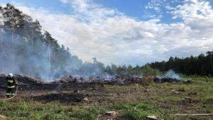 pozar lasu fot. osp chorzen3 300x169 - Konin: Pożar w Puszczy Bieniszewskiej. Kolejne podpalenie?