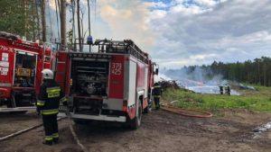 pozar lasu fot. osp chorzen4 300x169 - Konin: Pożar w Puszczy Bieniszewskiej. Kolejne podpalenie?