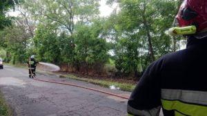pozar trawy fot. osp tarnowo podgorne 300x169 - Tarnowo Podgórne: Pożar w Gaju Wielkim