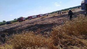 pozar zboza fot. osp pogorzela2 300x169 - Jarocin: Pożar zboża na polu w Bułakowie. Z powodu... kombajnu