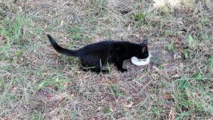 ratowanie kotka fot. osp gultowy2 300x169 - Siedlec: Strażacy z Gułtów uratowali kotka
