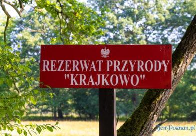 Poznań: Czy ujęcie wody w Krajkowie jest zagrożone?