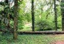 Poznań: Susza a drzewa w mieście