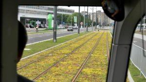 petla unii lubelskiej fot. pim3 300x169 - Poznań: 1 września tramwaje pojadą na nową pętlę!