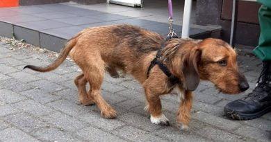 pies znaleziony przez strażników fot. SMMP