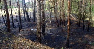 spalony las fot. Nadleśnictwo Oborniki