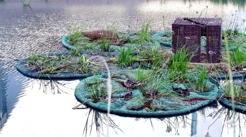 wodny ogród fot. ROŚŁ