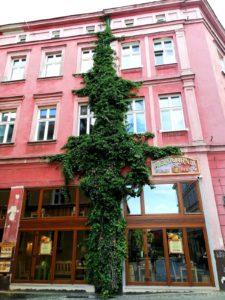 zamkowa zielen fot. t. dworek 2 225x300 - Poznań: Rada Osiedla Stare Miasto proponuje ogródki fasadowe!