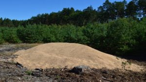 zboze fot. nadlesnictwo sierakow 300x169 - Sieraków: Leśnicy znaleźli w lesie... zboże