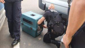 bojka gniezno fot. policja2 300x169 - Gniezno: Uczestnicy strzelaniny za kratkami