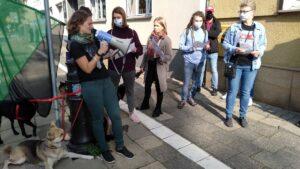 protest przeciwko wycince bieszczadzkich lasow inicjatywa dzikie karpaty 5 300x169 - Poznań: Pikieta przeciwko wycince bieszczadzkich lasów