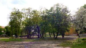 bukowska przed wycinka drzew fot. koalicja zazielen 300x169 - Poznań: Nielegalna wycinka drzew na Bukowskiej