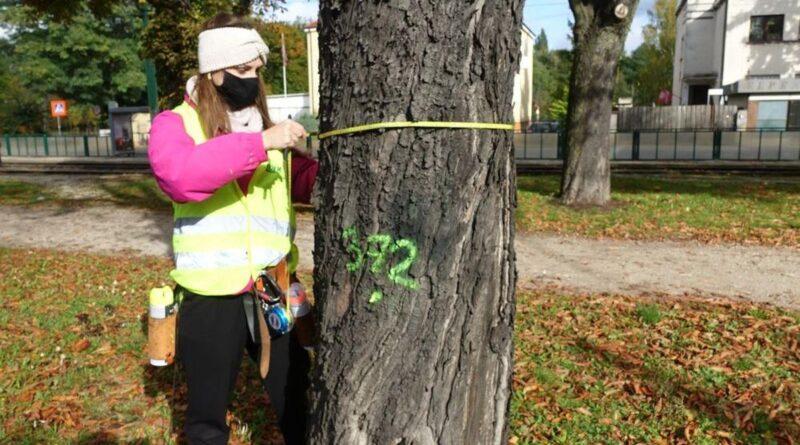 kontrola drzew fot. ZDM