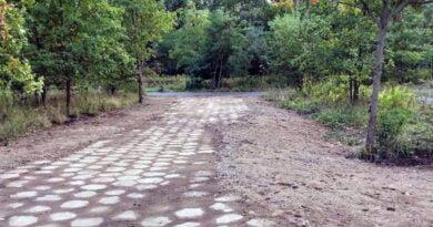 teren dawnej szkółki leśnej Krzyżowniki fot. UMP