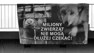 """baner na hlonda fot. fundacja viva3 300x169 - Poznań: Aktywiści przypominają politykom o """"piątce dla zwierząt"""". Banerami"""